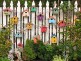 Brighten up a wall or fence and encourage wildlife to your garden.