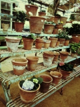 Terracotta pots...just make me happy